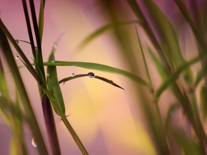 bamboo-2904531_1920